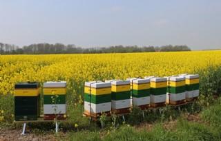 Biobrandstoffen+in+Duitsland+helpen+klimaat