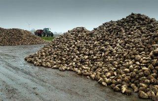Cosun betaalt 45,62 euro per ton suikerbieten