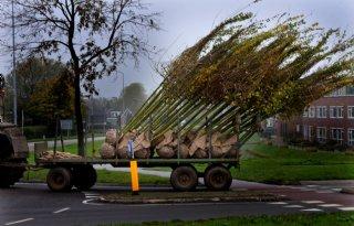 Britse+grens+dicht+voor+eikenbomen