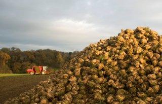 Belgische suikerfabriek raakt vergunning kwijt