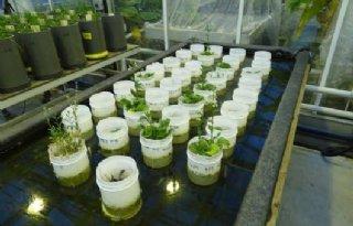 Lovende+woorden+voor+Wageningen+Plant+Research