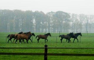 EIA%2Dvirus+bij+Duits+paard