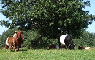Meer+boerennatuur+op+melkveebedrijven+FrieslandCampina