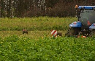 CDA+Gelderland+wil+maatregelen+tegen+varkenspest
