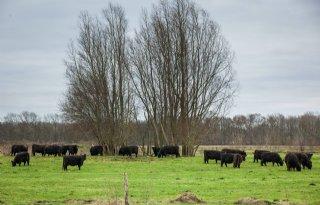 Boeren+tegen+Natura+2000+Wierdense+Veld