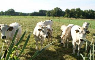 Vrijstellingsregeling+fosfaatrechten+vleesvee+is+rond
