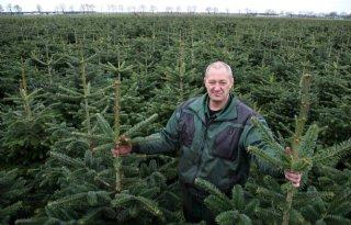 Fernhout teelt residuvrije kerstbomen met X-Weeder