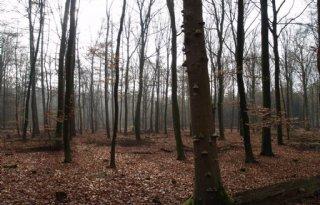 Europees+bos+kan+meer+broeikasgas+compenseren