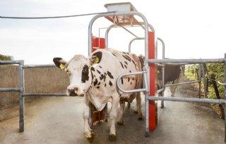 Lely+Grazeway+R+registreert+weidegang+koeien