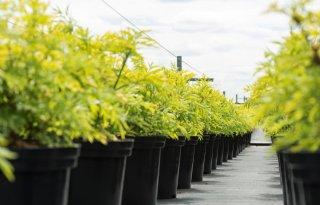 LTO voelt te weinig steun voor Ambitie Plantgezondheid
