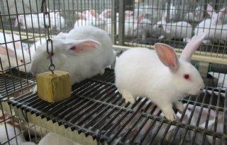 Taakstraf+voor+dierenactivist+na+inbraak