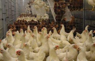Vleeskuikenproeflocatie Schothorst in gebruik