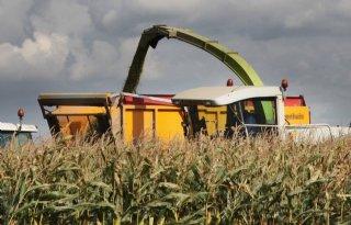 KWS%3A+mais+is+financieel+aantrekkelijker+dan+gras