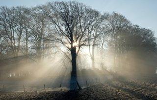 Plantendiversiteit+Europese+bossen+neemt+af