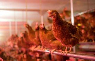 TV: 'Omvang stal zegt niets over welzijn van dieren'