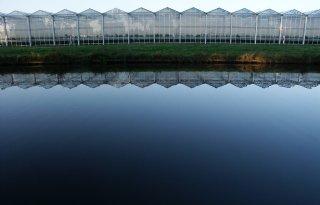 Glastuinbouw+voldoet+voor+70+procent+aan+zuiveringsplicht