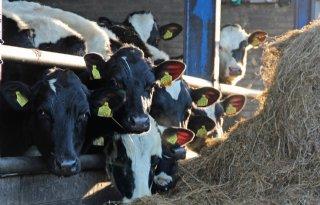 Krimp+veestapel+zorgt+voor+topjaar+export