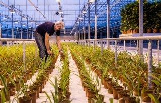 Curcumaknol+wijkt+voor+weefselkweek+bij+BK+Plant