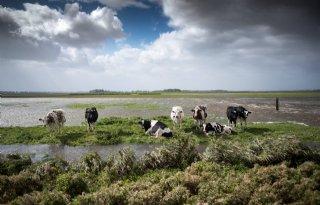 Provincies+stellen+rietproef+Lauwersmeer+uit