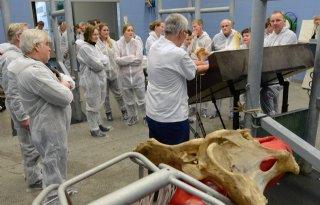 Vleesveehouders+oefenen+geboorte+kalf