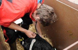 Kennis+delen+cruciaal+voor+antibioticareductie