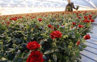 Meer overtredingen bij bloementransport door Valentijn