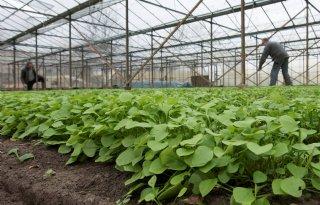 Vernieuwingsslag+biologische+glastuinbouw