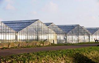 AVR+wil+CO2+afvangen+voor+glastuinbouw