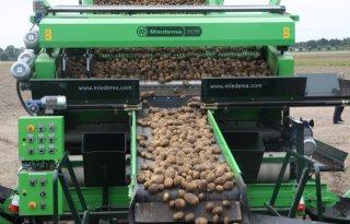 Nog+veel+aardappelen+in+Belgische+bewaarloodsen