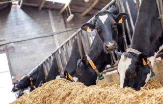 Hoe verhoog ik het saldo per koe?