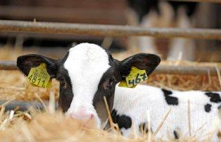 TV: Rechter heft I&R-blokkade melkveebedrijf deels op