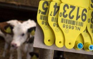 Getroffen+melkveehouder+vindt+aanpak+onregelmatigheden+I%26amp%3BR+onbegrijpelijk