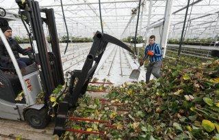 In land- en tuinbouw minste kans op beroepsziekte