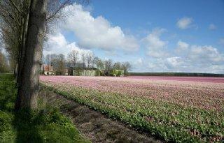 Ruim+300+hectare+geruild+in+de+Wieringermeer