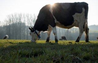 Boer+Oudega+verknocht+aan+polder