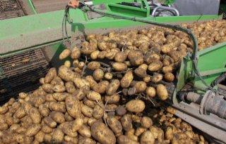 Belgische+aardappeloogst+tot+30+procent+kleiner