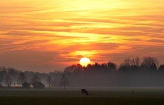 TV: Boeren houden vee koel