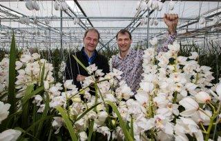 Star Orchids vernieuwt, ook over grens