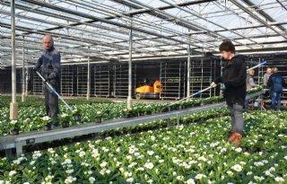 %27Raar+en+slecht+seizoen+voor+kwekers+tuinplanten%27