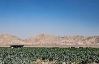 Bejo Seeds groeit in moestuin van Amerika