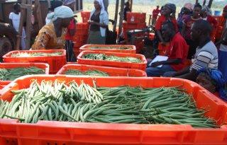 Foodwatch+strijdt+tegen+schadelijke+stoffen+op+importproducten
