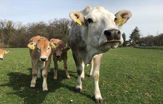 %27Externe+kosten+verhogen+kostprijs+vlees+en+zuivel+fors%27