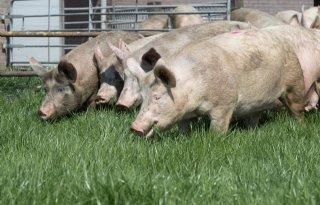 POV+waarschuwt+voor+dierenactivisten