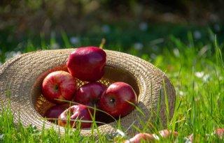 Bijna helft voedingsmiddelen bevat middelenresten