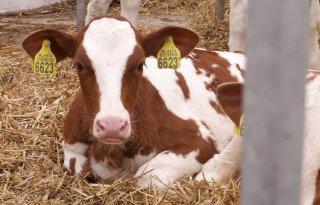 Nog+81+melkveebedrijven+op+slot+vanwege+%27I%26amp%3BR%2Dfraude%27