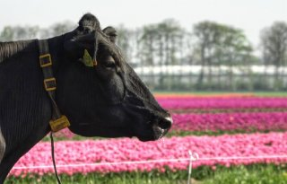 TV: Kringlooplandbouw vergroot kans op dierziekten