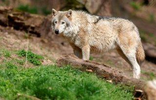 LTO+kritisch+over+provinciaal+wolvenplan
