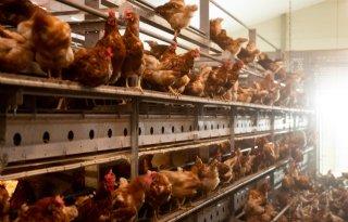 Vogelgriep+in+Belgi%C3%AB+lijkt+onder+controle