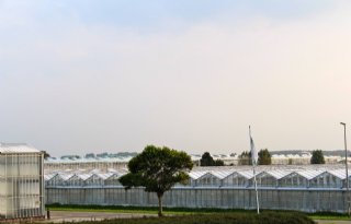 Organisaties Glastuinbouw Zuidplas opgeheven