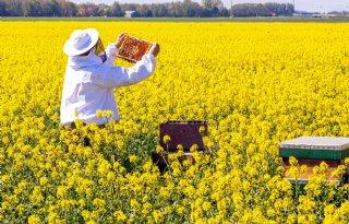 Hogescholen+werken+samen+in+bijenonderzoek